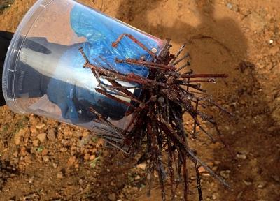 Jak posbírat hřebíky z popela pomocí neodymových magnetů.